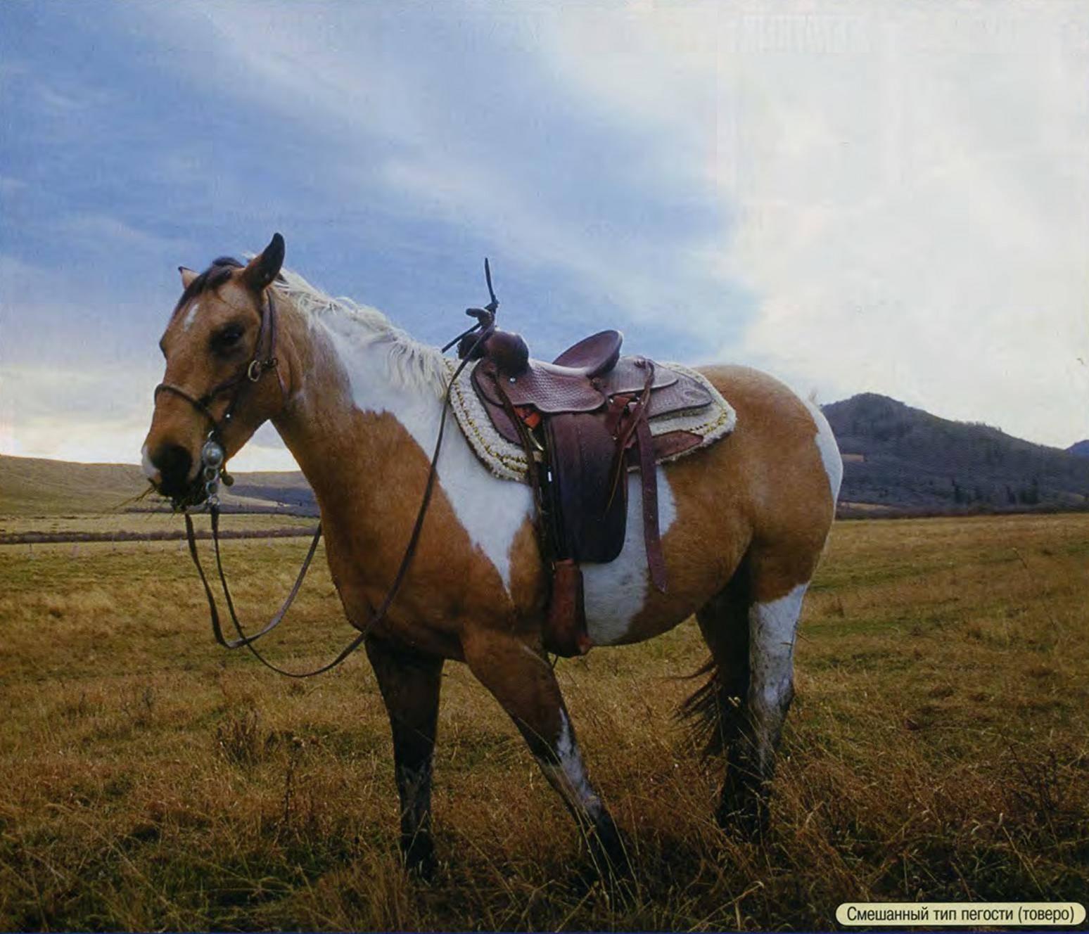 Какие бывают масти лошадей: названия и описания