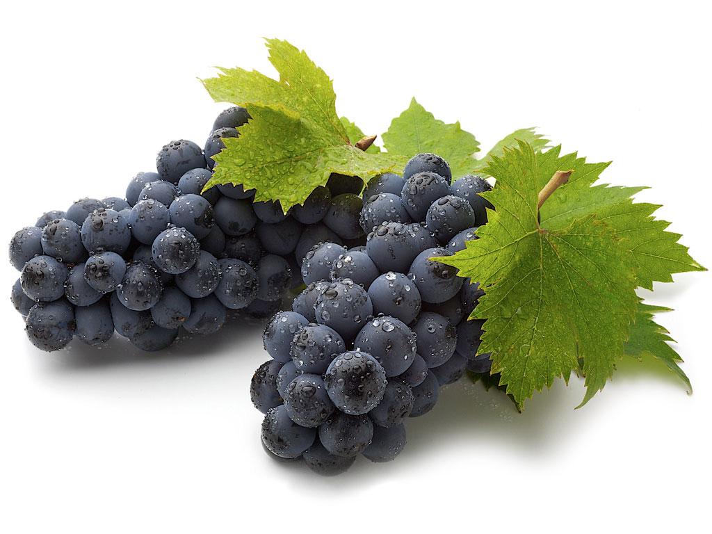 Посадка винограда в сибири для начинающих весной, как вырастить и ухаживать