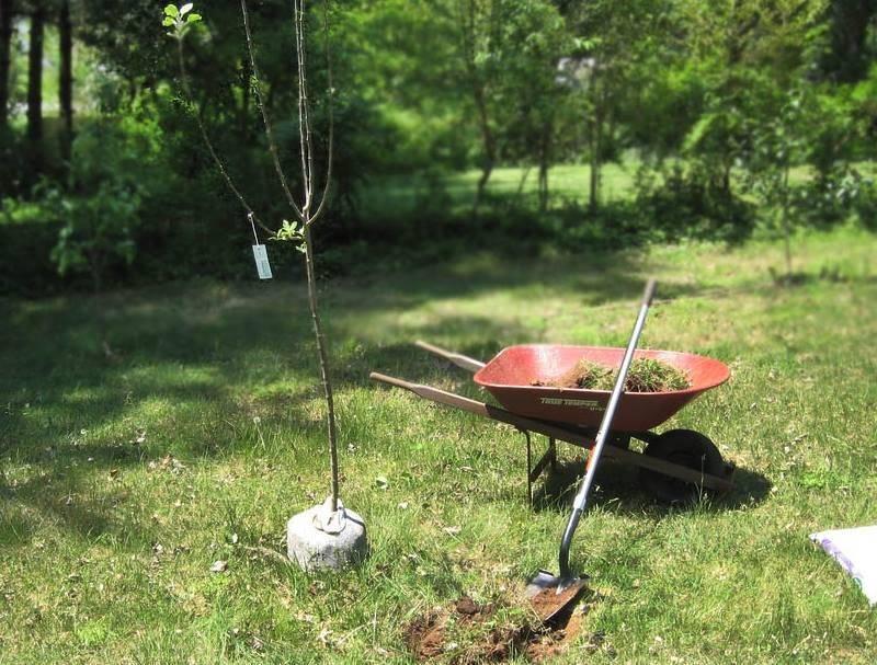 Как посадить деревья и кустарники, выбрать место, подготовить ямы