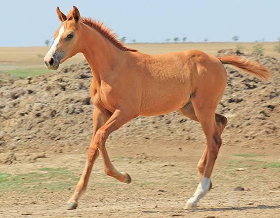 Проект возрождения донской и буденновской пород лошадей «золото степей» - отчет о работе и важные события