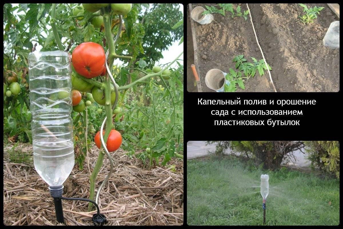 умное полив томатов через пластиковые бутылки фото более-менее объективно показывает