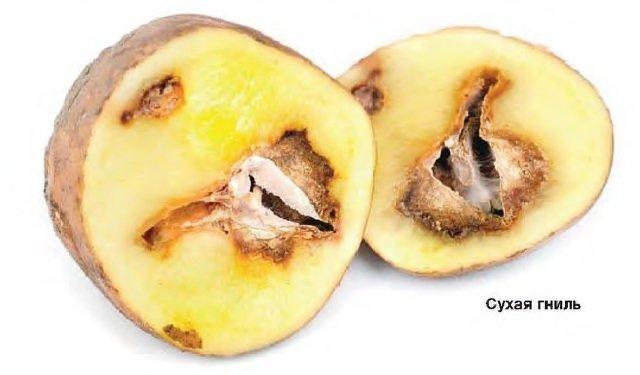 Картофель болезни фото, лечение, описание.