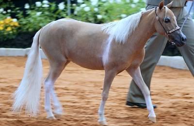Самая тяжелая лошадь в истории и современности