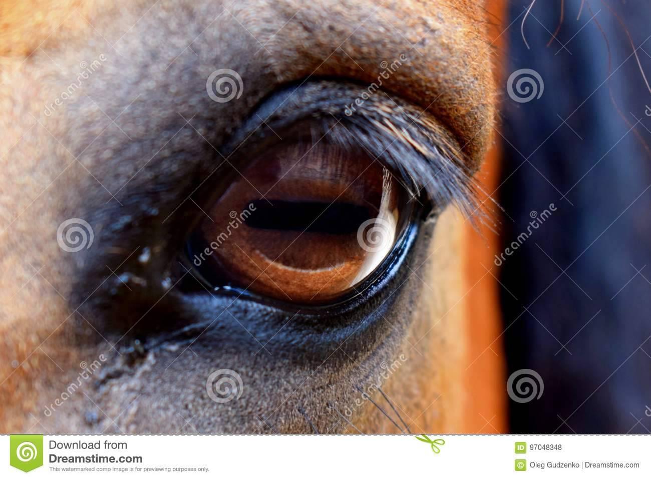Зрение лошади и особенности глаз
