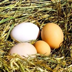 Куры клюют яйца: каковы причины и что делать?