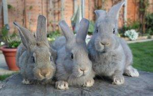 Зимнее содержание кроликов на улице