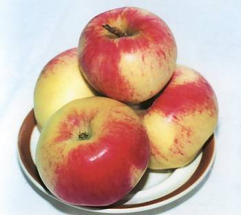 """Яблоня """"павлуша"""": внешний вид, урожайность, особенности посадки и ухода"""