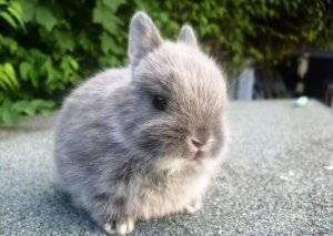 Как выбрать и купить здорового карликового кролика. часть 1