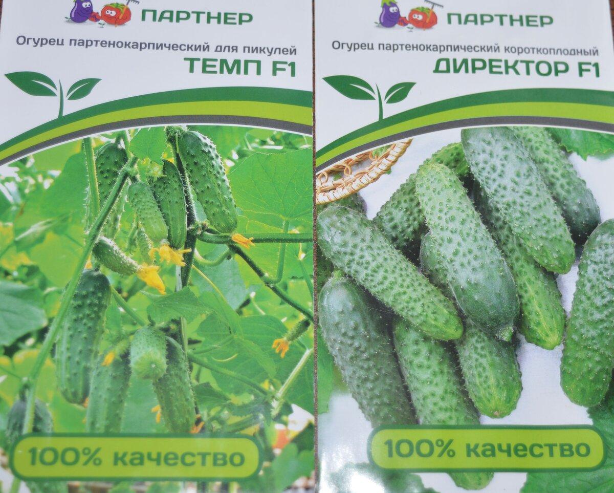 Сорт огурца темп: выращивание, посадка и уход, фото