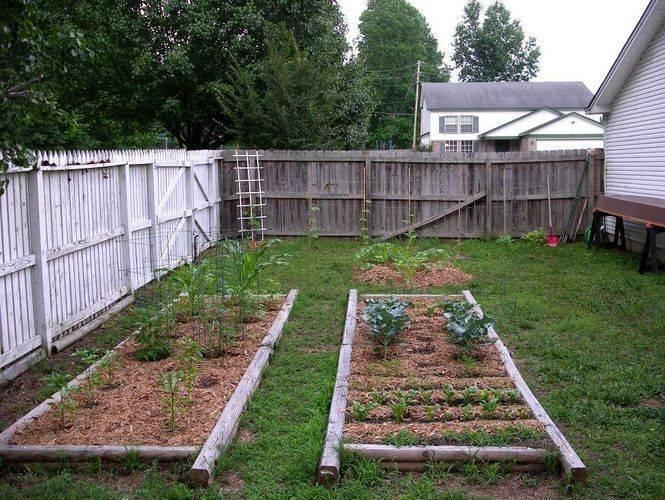 Тенистый сад (с примерами оформления и списком тенелюбов)