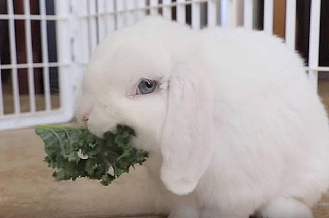 Как выкормить крольчат без крольчихи: заменители молока, подкормки, уход за новорождёнными