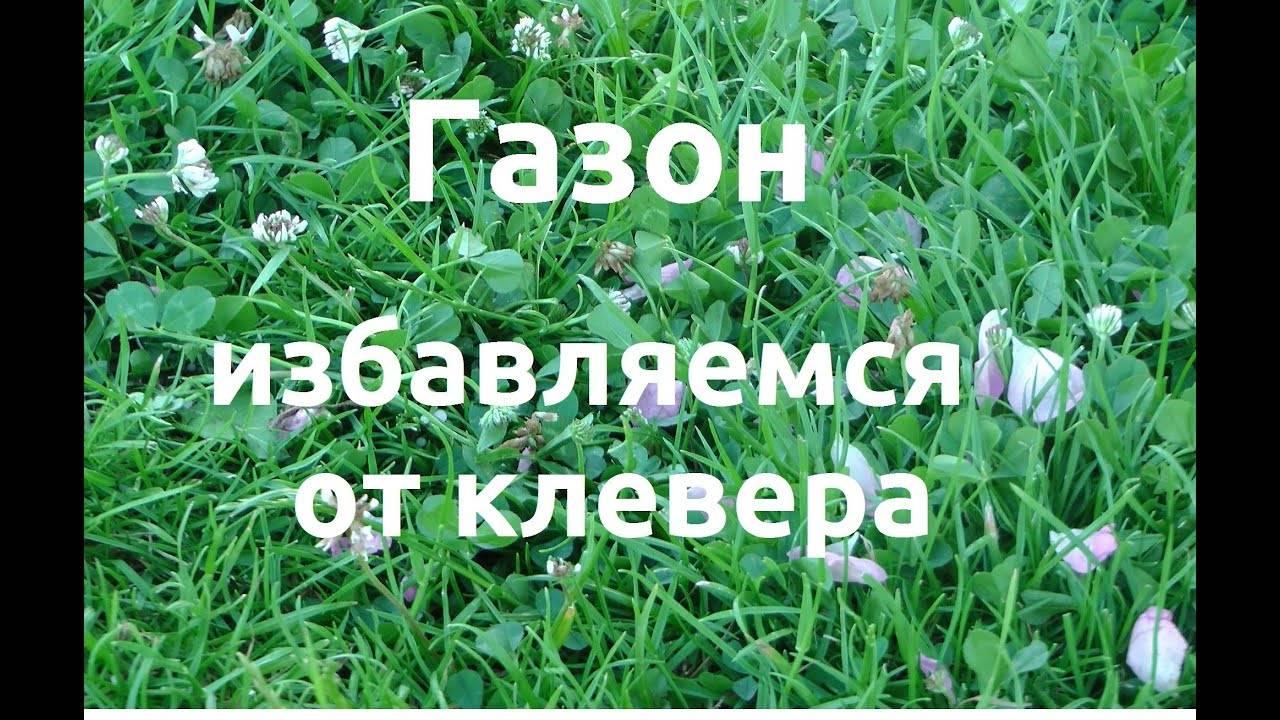 Семена белого клевера - растения– строение цветка, листа, виды растений – съедобные и ядовитые, галлюциногенные и смертельные растения, гистология