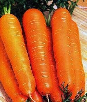 Морковь лосиноостровска.  морковь «лосиноостровская 13»: описание сорта и тонкости выращивания