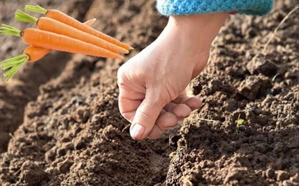 Почва: подготовка участка к весенним посадкам