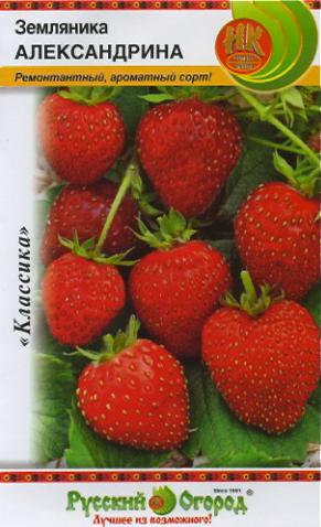 Земляника александрина: выращивание из семян, отзывы, описание