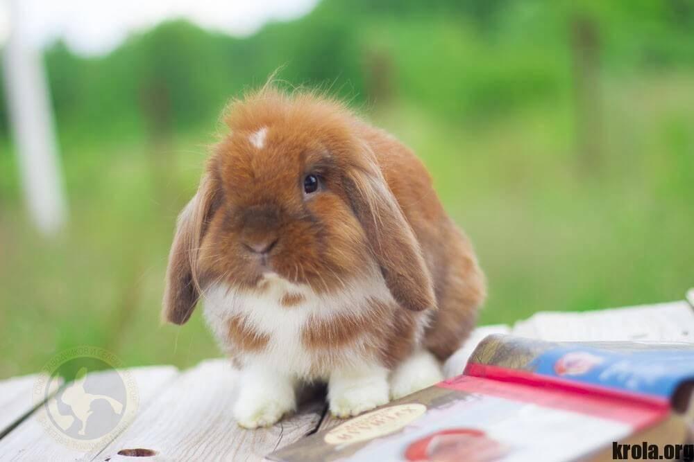 Дрессируем и приучаем кролика к своим рукам!