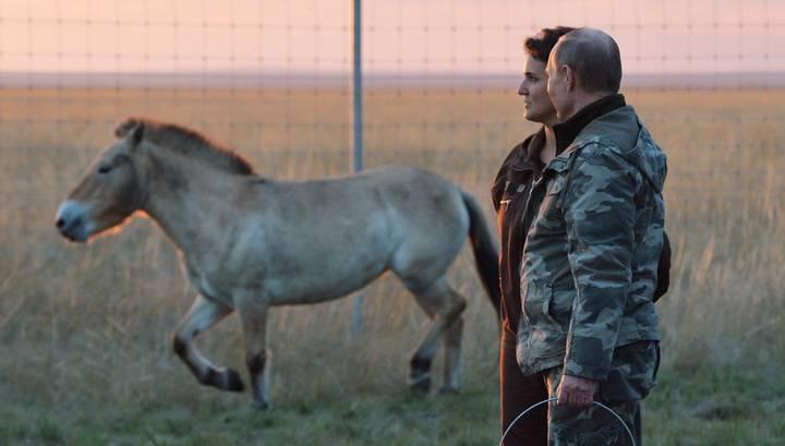 Лошадь пржевальского, описание, где обитает, интересные факты, фото, видео, содержание