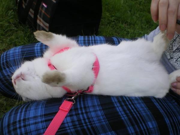 Домашний челедж: стрижем когти кошке сами