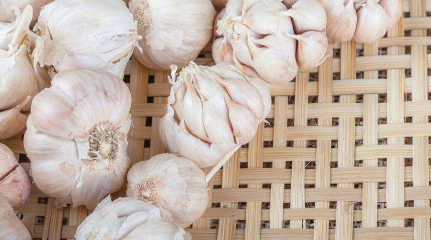 Лучшие сорта чеснока | образцовая усадьба