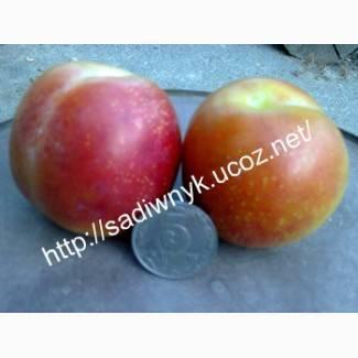 Слива персиковая: описание и советы по выращиванию