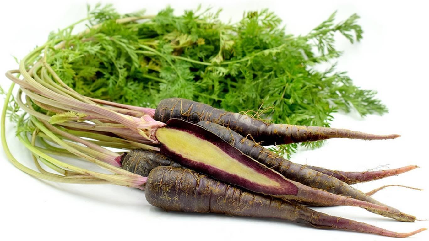 Черная морковь: что это такое, чем полезно растение