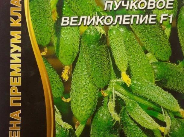 Сорта огурцов для урала