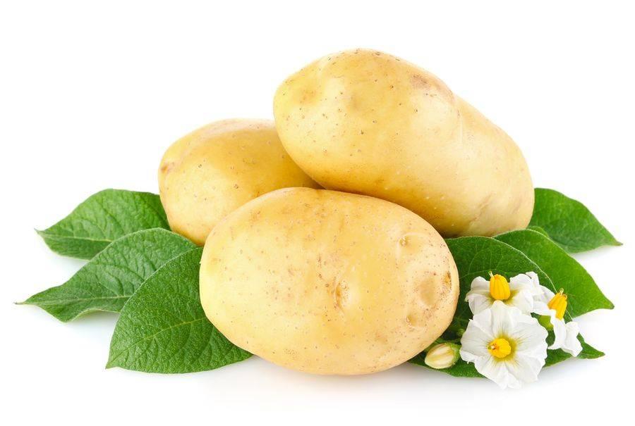 Сорт картофеля тулеевский