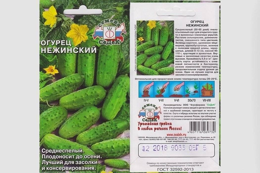 Огурец нежинский выращивание - общая информация - 2020