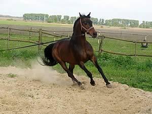Как понять и обучить диких лошадей?