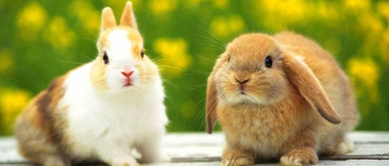 Почему дохнут кролики?
