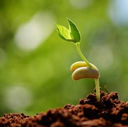 6 шагов как замочить семена помидор перед посадкой | красивый дом и сад