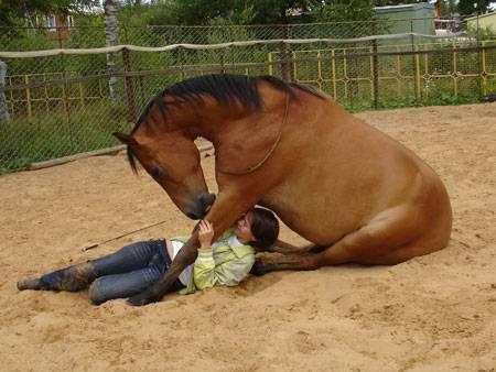 Как спариваются лошади?