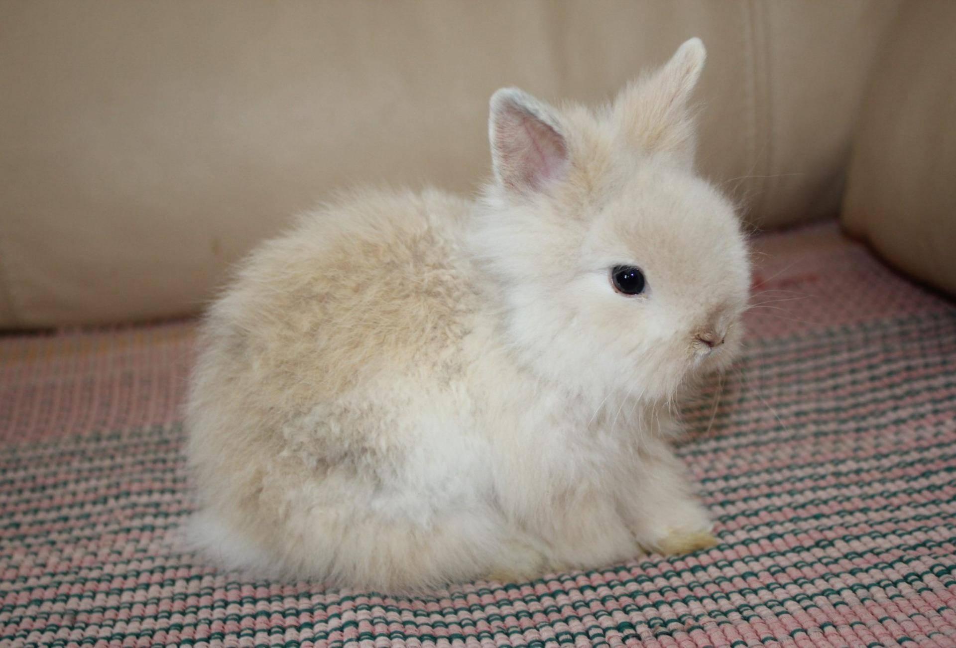 Чем лечить в домашних условиях понос у кроликов