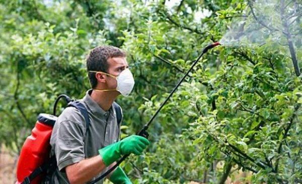 О червях в цветах яблони: чем обработать дерево, чтобы не было червивых яблок