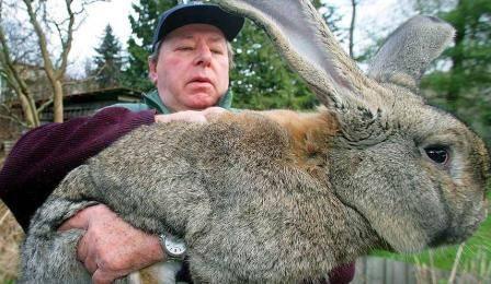 Как забить и разделать кролика