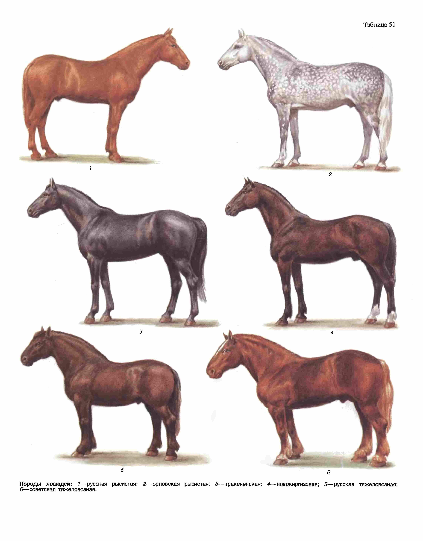 Клички для лошадей: список популярных и красивых имен, которыми можно назвать кобыл и жеребцов