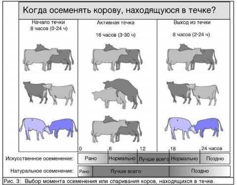 Календарь отела коров таблица