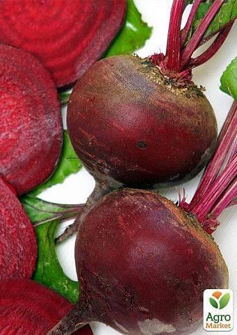 Бордо: описание сорта свеклы, как правильно ухаживать и выращивать