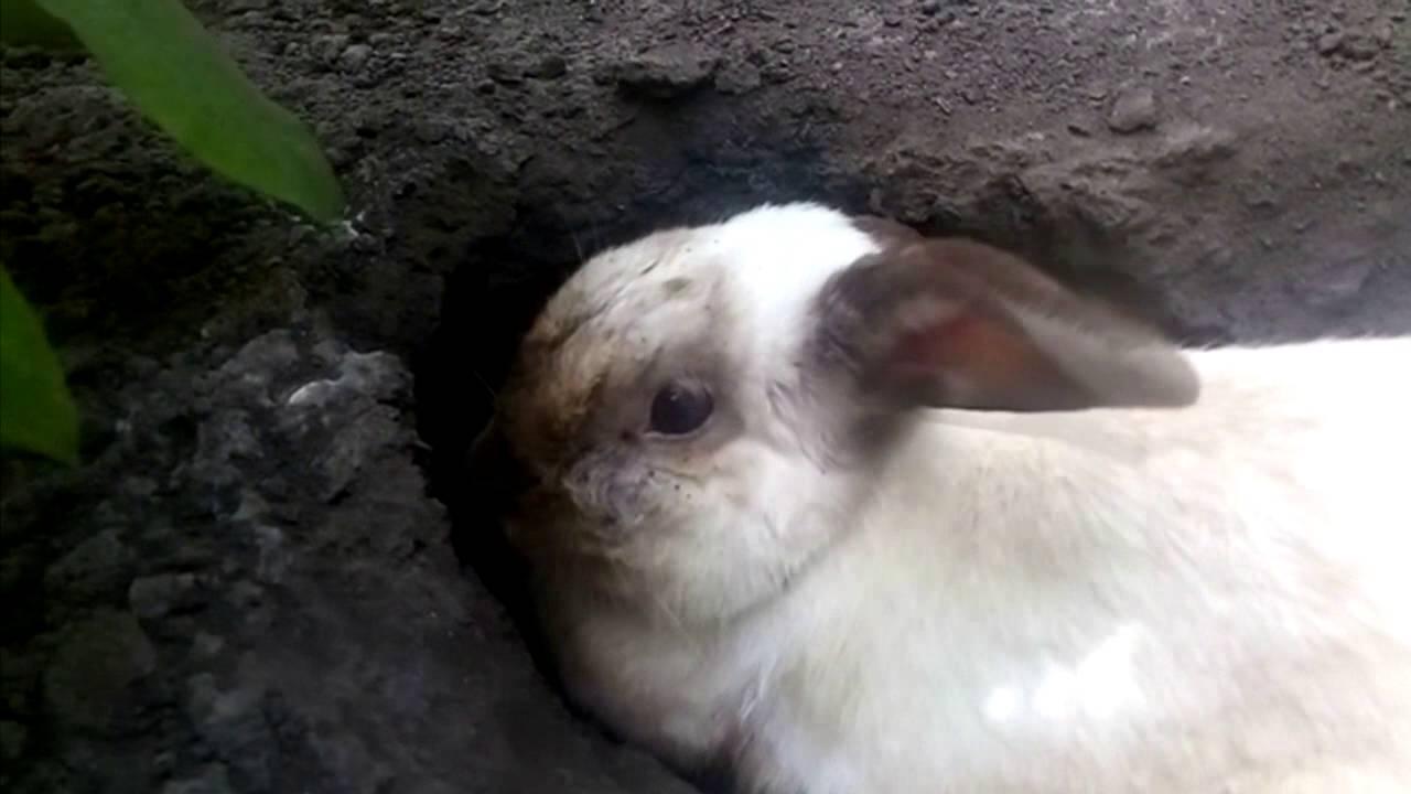 Тепловой и солнечный удар у кроликов: признаки, лечение, профилактика