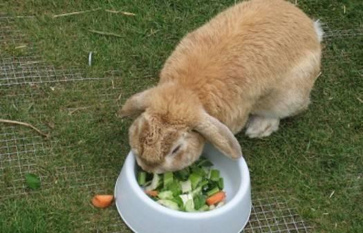 Можно ли кроликам сало? можно ли давать кроликам кабачки: как кормить, едят ли тыкву и сырые листья?