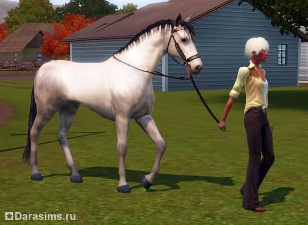 Как обучают лошадей: разъясняем со всех сторон