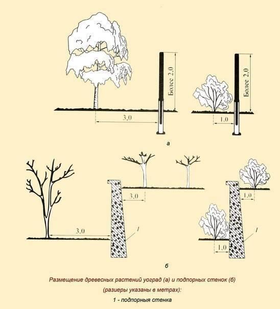 Особенности посадки яблони