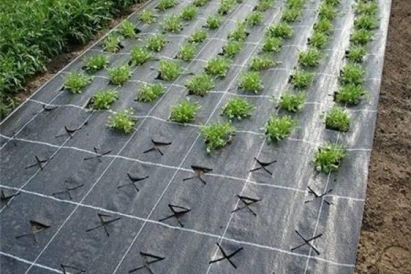 Чем укрыть клубнику на зиму от мороза: лучший укрывной материал для растения