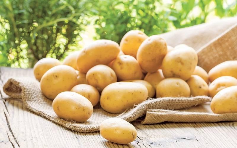 Китайский способ выращивания картофеля: методы посадки и особенности технологии