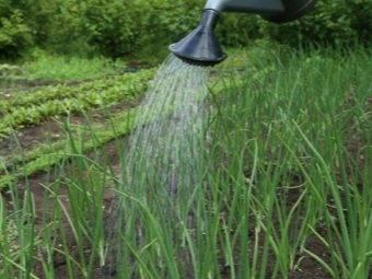 Обработка лука-севка перед посадкой весной 2019 года, как правильно обрабатывать лук перед высадкой, готовим правильную почву