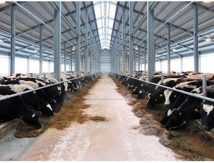 Рейтинг топ-20 крупнейших животноводческих хозяйств рф по поголовью крс