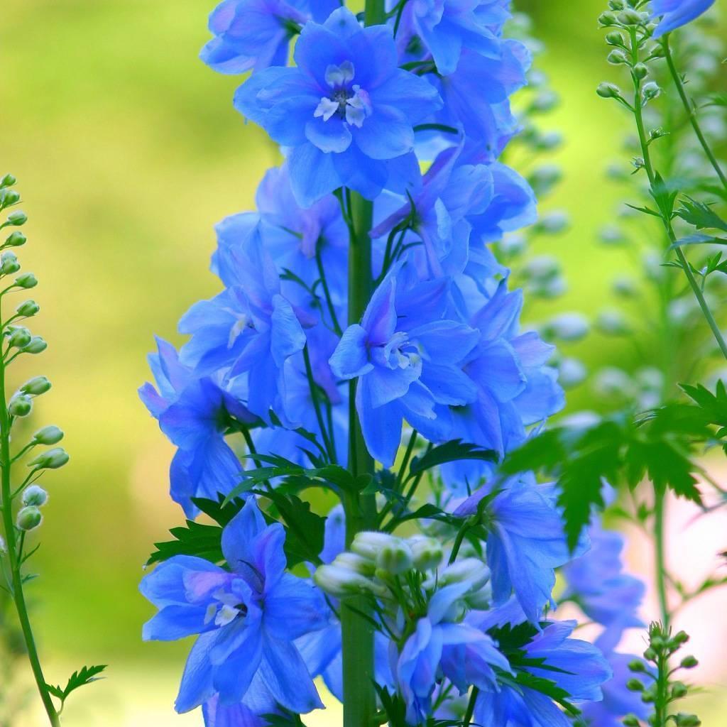 Как посадить клумбы цветущие все лето: лучшие цветы с фото