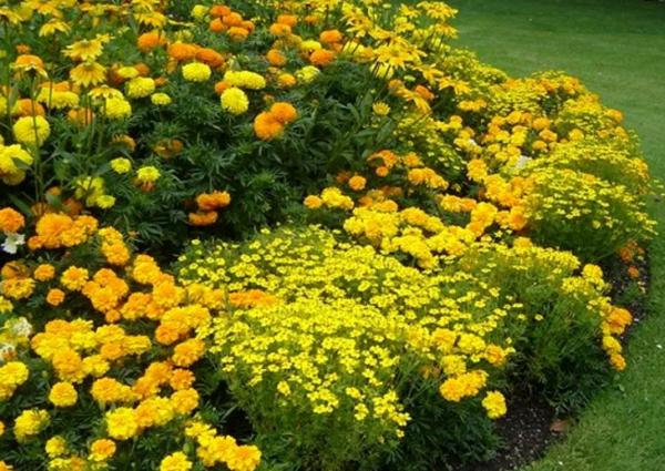 Цветок с желтыми цветками: название, описание и фото. желтые садовые цветы