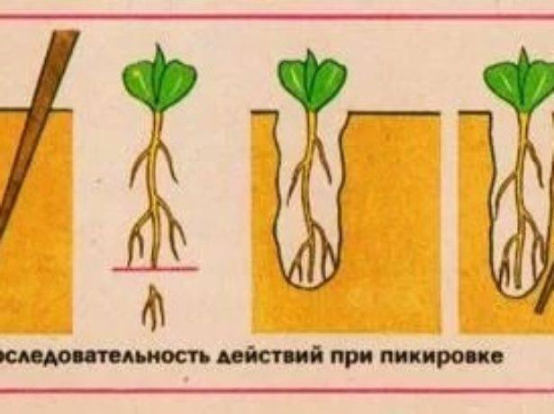 Как и когда сажать семена огурцов на рассаду