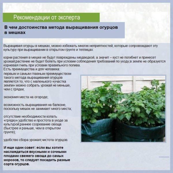 Как посадить огурцы в мешках с землей?